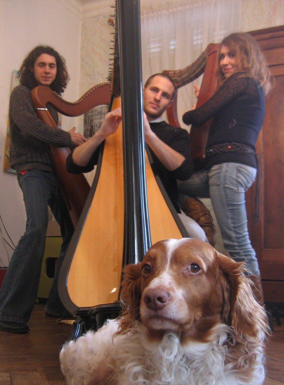 krank-harpes-samy
